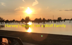 Impact on a Wolf Family —- Harvey