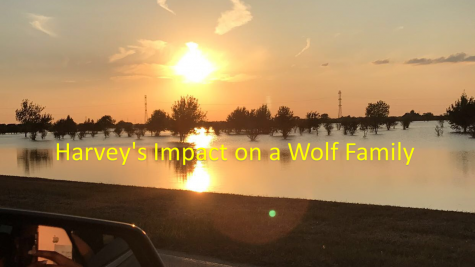 Impact on a Wolf Family ---- Harvey