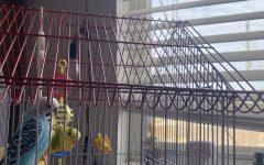 Quarantine with Laika and Jack